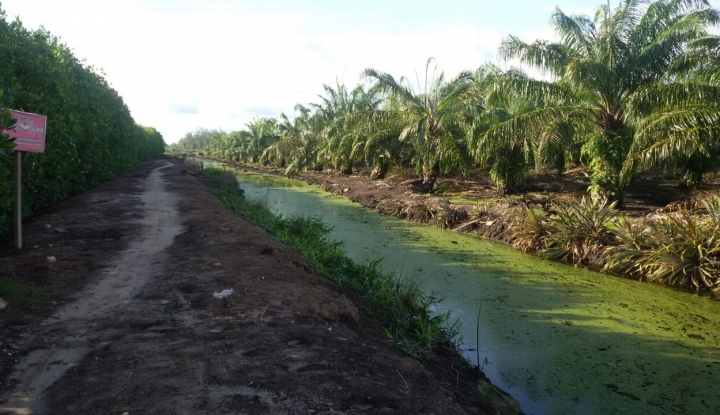 Foto Berita Perkebunan Kelapa Sawit Dapat Ditetapkan Sebagai Objek Vital Nasional
