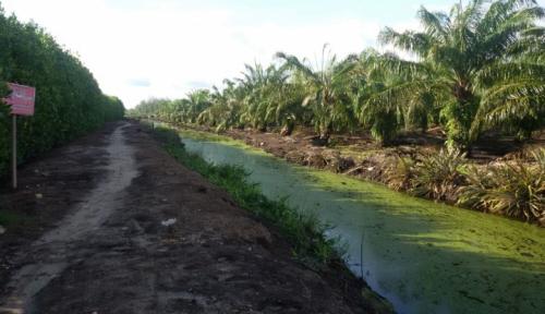 Foto 49 Hektare Lahan di Mukomuko Belum Dicetak Jadi Sawah