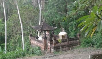 Foto BI Dorong Peningkatan Produksi Kopi di Kintamani