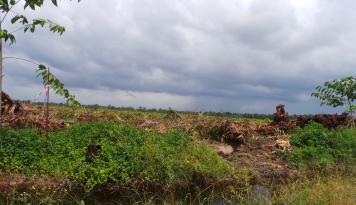 Foto Korporasi Mulai Jalankan Skema Bisnis Investasi pada Lahan Gambut
