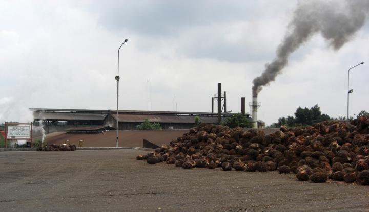 Foto Berita PTPN dan Unilever Sepakat Percepat Produksi Minyak Sawit Berkelanjutan di Indonesia