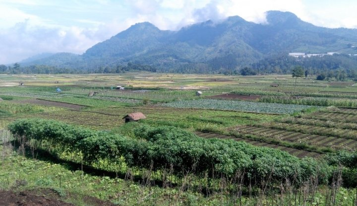 Foto Berita Dinas Pertanian Mukomuko Bidik 25 Ha Lahan Mina Padi