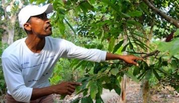 Foto Awal 2017, Kenaikan NTP di Riau Tertinggi di Sumatera