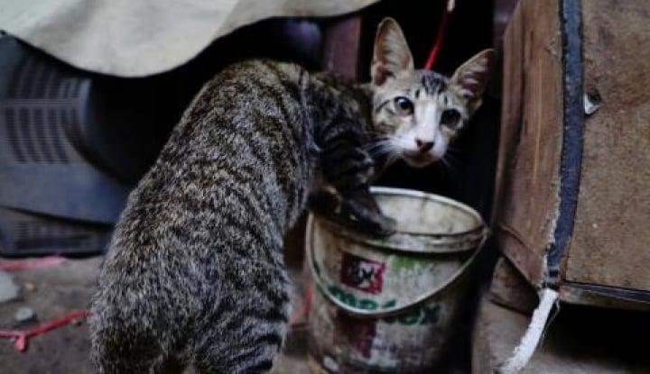 Foto Berita Anies Tunda Kebijakan Razia Kucing, Lho Kenapa Emangnya Pak?