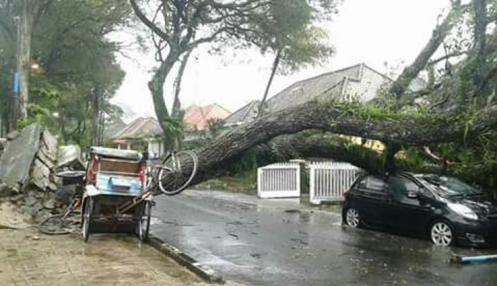 Foto Berita Sejumlah Pohon di Yogyakarta Tumbang Akibat Diguyur Hujan Lebat