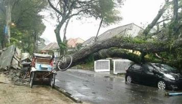 Foto Sejumlah Pohon di Yogyakarta Tumbang Akibat Diguyur Hujan Lebat