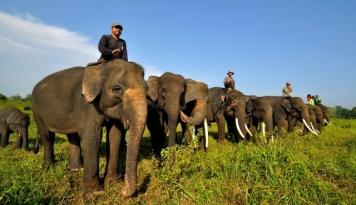 Foto Mendorong Way Kambas jadi Destinasi Wisata Dunia (1)