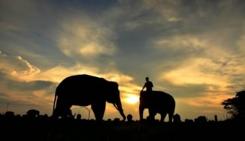 Foto Mendorong Way Kambas jadi Destinasi Wisata Dunia (2)