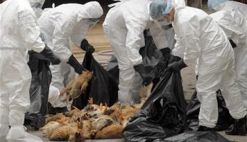 Foto Satu Warga Bandar Lampung Terjangkit Flu Burung