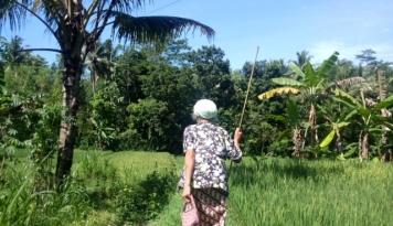Foto 2017, Bali Dapat Alokasi Pupuk Urea Bersubsidi 32.280 Ton