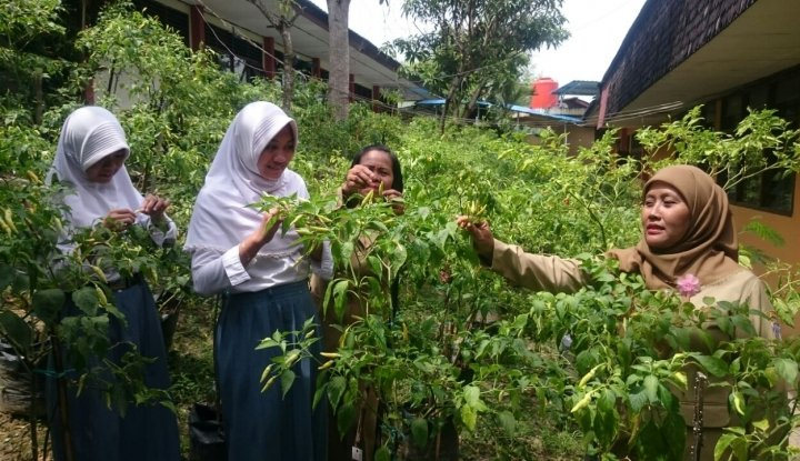 Foto Berita Siswa SMA 3 Balikpapan Panen 350 Kg Cabai di Sekolah