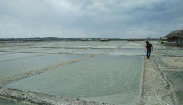 Foto BPPT Gandeng PT Garam Kembangkan Produk dalam Negeri