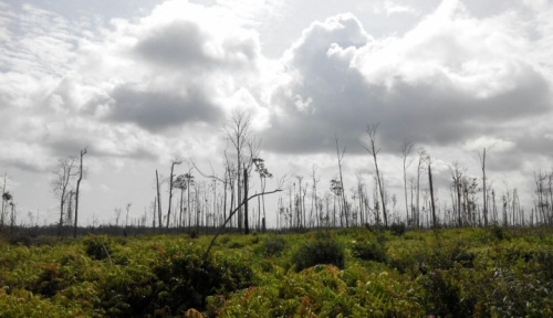 Foto Presiden Minta Ada Terobosan Pengelolaan Hutan