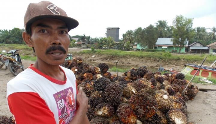 Foto Berita Pemberitaan Media Internasional soal Kelapa Sawit Indonesia Cenderung Negatif