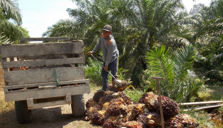 Foto Berita Akademisi Ini Sebut Sawit Bukan Penyebab Deforestasi