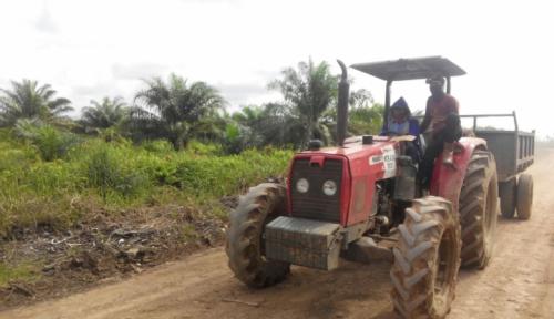 Foto 70 Ribu Hektar Lahan Sawit di Sumut Tidak Produktif