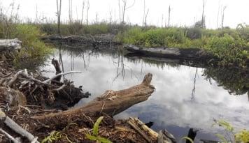 Foto BRG Terjunkan 400 Water Logger di Provinsi Prioritas