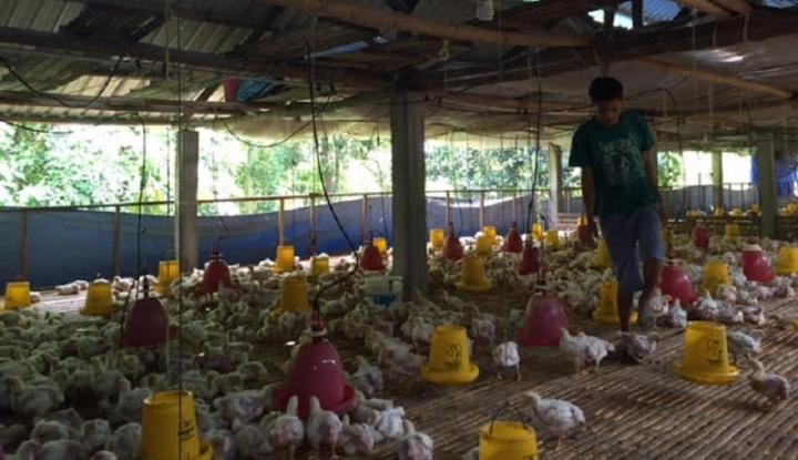 Demo Peternak Ayam, TIGFII: Tanggung Jawab Harga di Kemendag