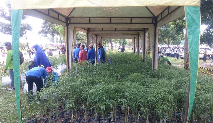 Foto Berita Dari 30.000 Tanaman Herbal di RI Baru Dimanfaatkan 13.000