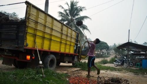 Foto Sofyan Djalil: Kami Akan Replanting 30.000 Hektare Lahan Sawit