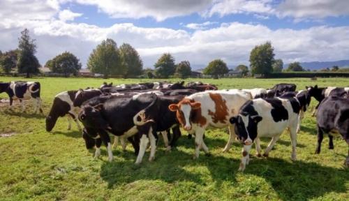 Foto Pelaku Industri Susu Diminta Gunakan Produksi Peternak Lokal