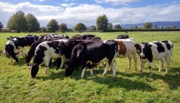 Foto Cargill Bangun Demo Farm Pengembangbiakan Sapi dan Domba