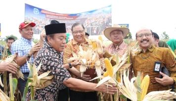 Produktivitas Petani Jagung di Lamongan Naik Jadi 10,6 Ton Perhektare