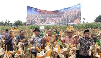 Foto Menteri Puspayoga Dorong Lamongan Jadi Pusat Industri Olahan Jagung