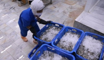 Foto 10 Ribu Ekor Lobster Nyaris Diselundupi di Riau