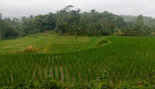 Foto Perubahan Iklim Berisiko Terhadap Sektor Pertanian
