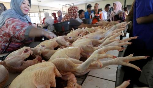 Foto Harga Daging Ayam di Medan Tembus Rp31 Ribu Perkg
