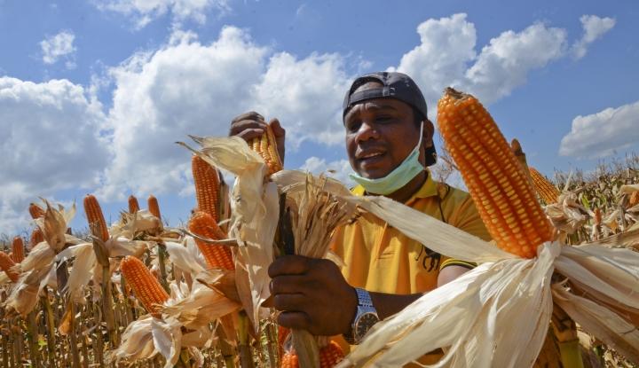 Kementan Gandeng Sejumlah Instansi Panen Jagung di Banten - Warta Ekonomi