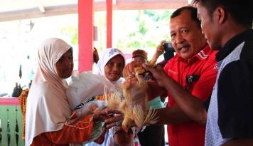 Foto Jelang Lebaran, Pelindo I Bagikan  2.650 Ayam Siap Potong