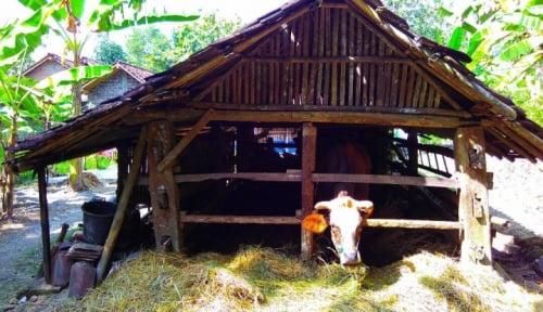 Foto Harga Daging Sapi Stabil di Bojonegoro