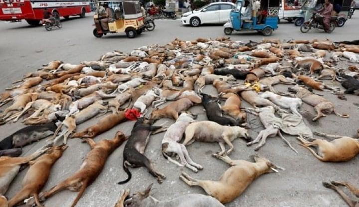 Foto Berita Gigit Orang Sampai Tewas, Pemilik Anjing Pitbull Ditahan