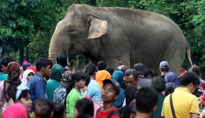 Foto Berita Lebaran 2018: Lebih dari 85 Ribu Pengunjung Padati Ragunan