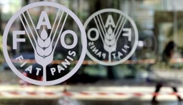 Foto FAO: Ketahanan Pangan Indonesia Terancam