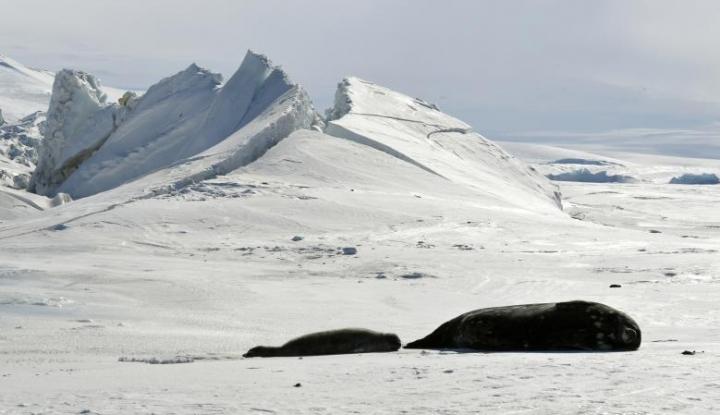 Suka Wisata ke Lokasi yang Sejuk? Santai, Maskapai Ini Bisa Disewa buat Travelling ke Antartika Kok - Warta Ekonomi