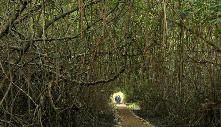 Foto Berita Masyarakat Togean Diimbau Jaga Kelestarian Hutan Bakau
