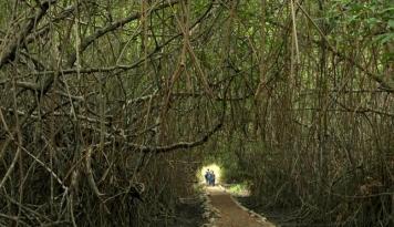 Foto Masyarakat Togean Diimbau Jaga Kelestarian Hutan Bakau