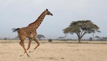 Foto Sejumlah Negara Afrika Mulai Tutup Perbatasan