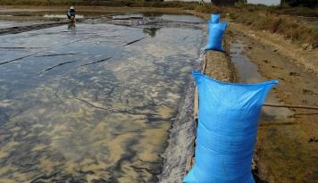 Foto Masalah Garam Jadi Pelajaran Berharga Pemerintah, Kata Darmin