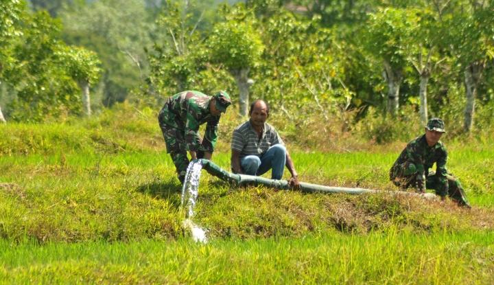 Pertanian RI Dinilai Makin Tunjukkan Perbaikan - Warta Ekonomi