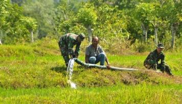 Foto Gagal Panen Ancam 140 Hektare Sawah di Nagan Raya, Kenapa?