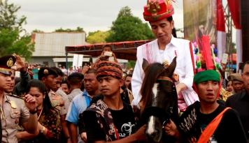 Foto Presiden Jokowi Dapat Hadiah Dua Kuda Jantan Sandelwood