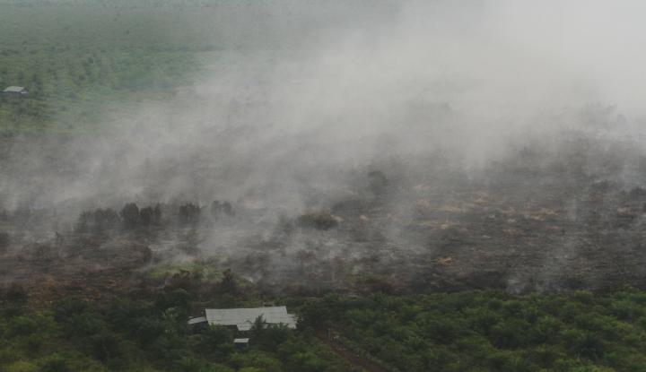 35 Hektare Lahan Gambut Milik Warga Terbakar, Penyebabnya? - Warta Ekonomi