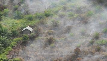 Foto Kering dan Kemarau Panjang, Daerah ini Jadi Wilayah Terancam Kebakaran