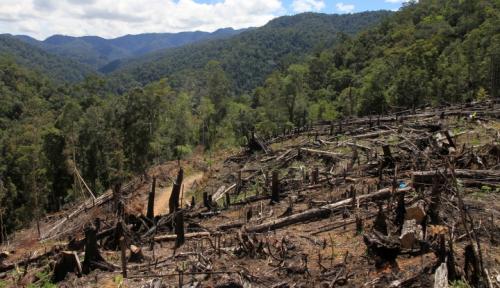 Foto 10 Hektare Hutan dan Lahan Terbakar di Aceh