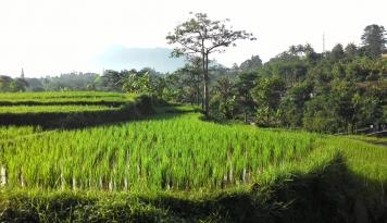 Foto Bendungan Irigasi Jebol, Ratusan Hektare Sawah Terancam Kekeringan