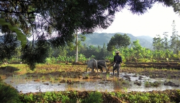 Foto 2018, Pemkab Badung Asuransikan 1.800 Hektare Sawah